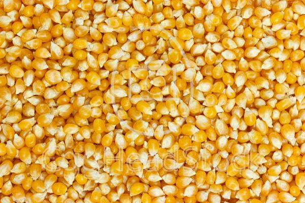 Background of uncooked corn grains - EggHeadStock