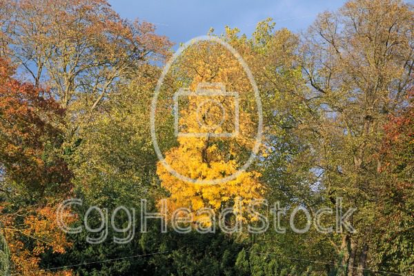Beautifully colored autumn leaves in the park - EggHeadStock