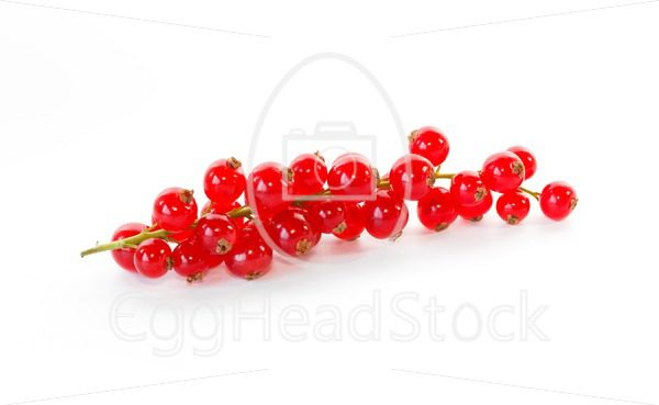 Branch of red currant - EggHeadStock