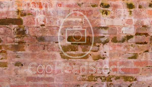 Brick wall with green algae - EggHeadStock