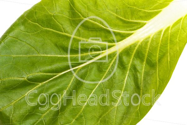 Close up of pak choi (Brassica rapa) leaf - EggHeadStock