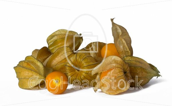 Closed and opened Cape Gooseberries (Physalis peruviana) - EggHeadStock