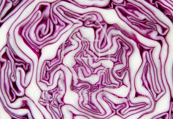 Closeup of a red cabbage sliced in half - EggHeadStock