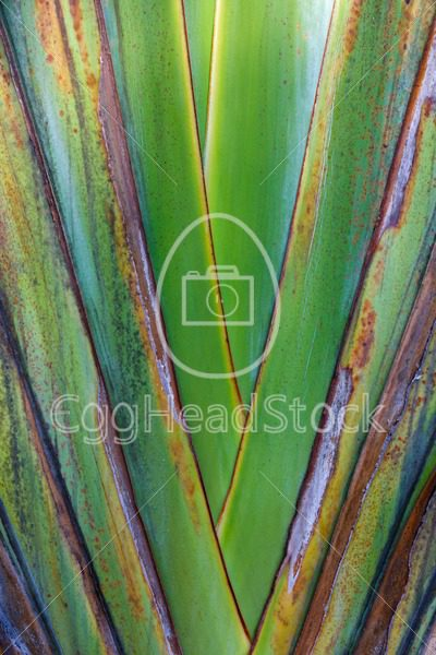 Closeup of side of Wild Banana plant - EggHeadStock