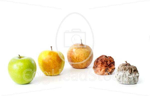 Five apples in different stages of decay - EggHeadStock
