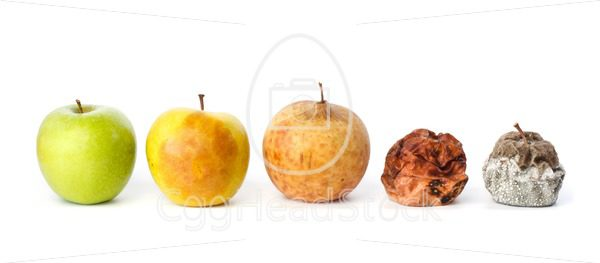Five apples in various states of decay - EggHeadStock