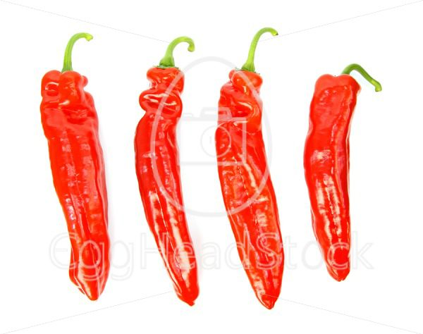 Four pointed peppers in a row - EggHeadStock