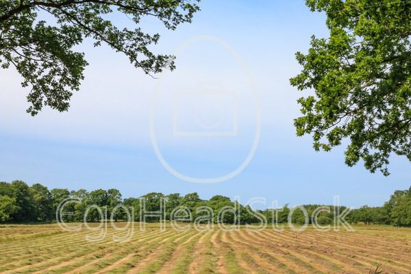 Glimpse on a mown hayfield - EggHeadStock