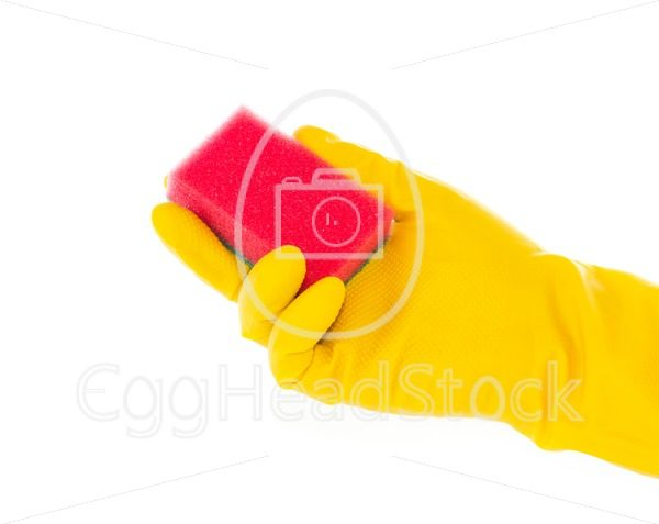 Hand in rubber glove with red cleaning sponge - EggHeadStock