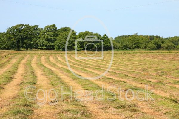 Mown hayfield on a summer day - EggHeadStock