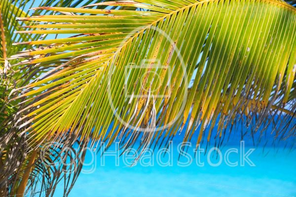 Palm leaves on tropical beach with blue sea - EggHeadStock
