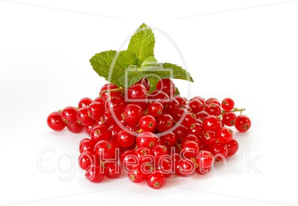 Red currant with a sprig of mint - EggHeadStock
