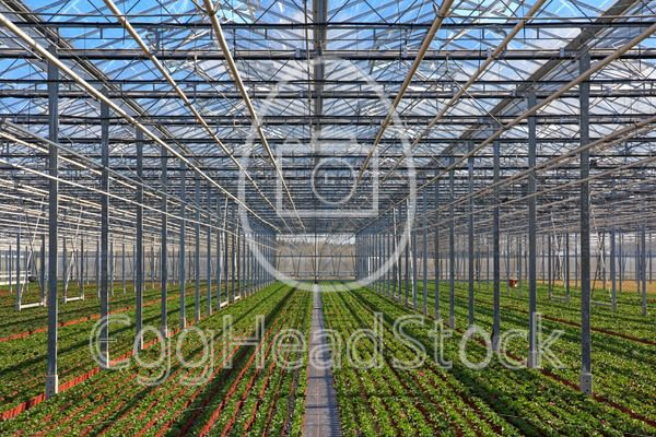 Rows of young plants growing in the greenhouse - EggHeadStock