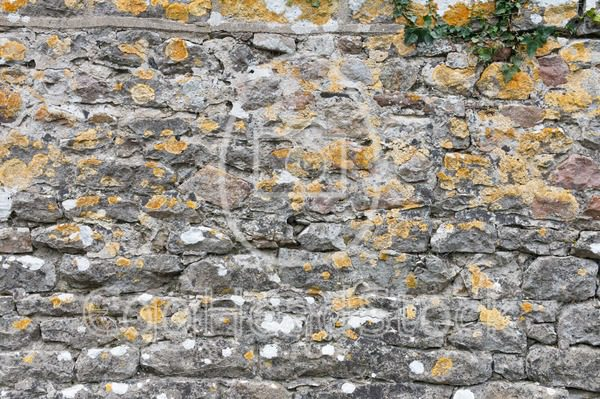 Stone wall background with lichens - EggHeadStock