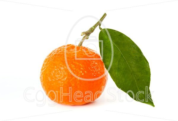 Tangerine with stem and leaf - EggHeadStock