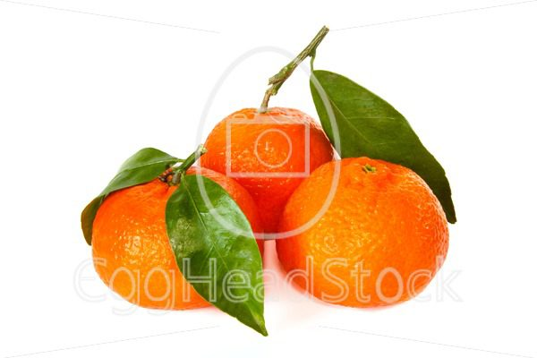 Three tangerines with stem and leaf - EggHeadStock