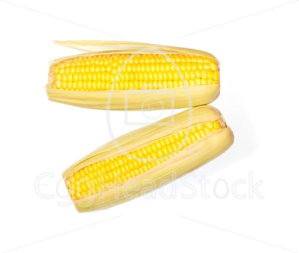 Two corn cobs - EggHeadStock