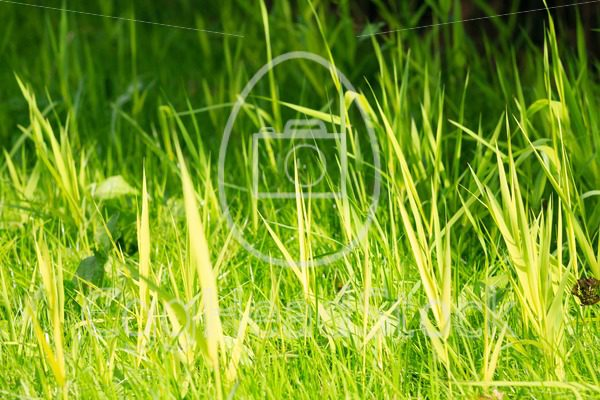 Vibrant green grass with small DOF - EggHeadStock