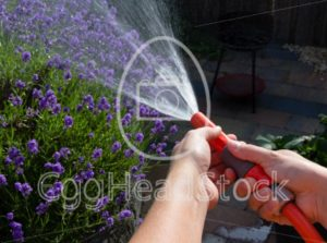 Watering the garden on a summer evening - EggHeadStock