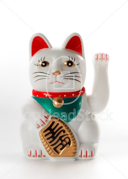 White lucky cat, Maneki-neko - EggHeadStock