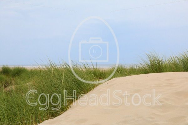 Dunes along the North Sea coast - EggHeadStock