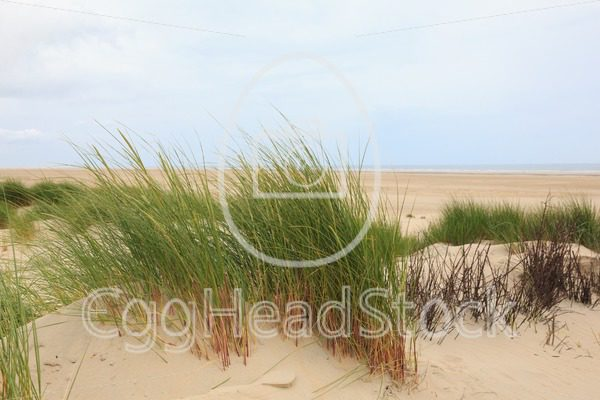 View on the sandy beach - EggHeadStock