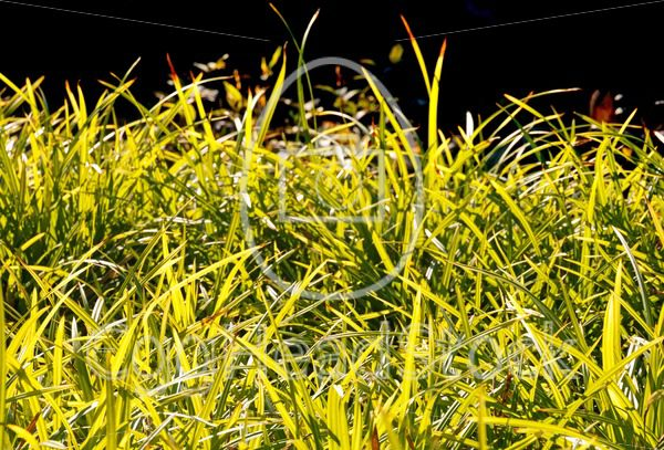 Grass in the late afternoon autumn sun - EggHeadStock