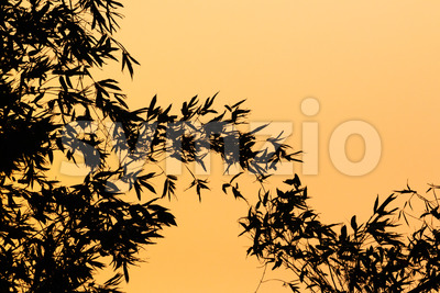 Silhouette of bamboo plants against an orange background Stock Photo