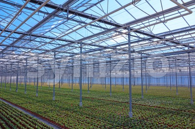 View through the greenhouse with rows of young plants Stock Photo