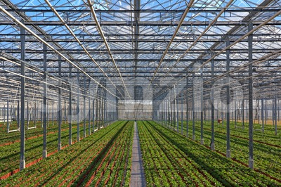Rows of young plants growing in the greenhouse Stock Photo