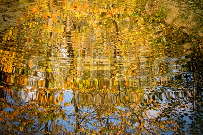 Branches with leaves reflected in the rippling water surface Stock Photo