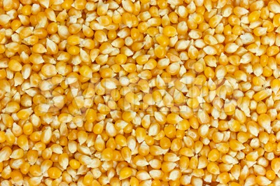 Background of uncooked corn grains Stock Photo