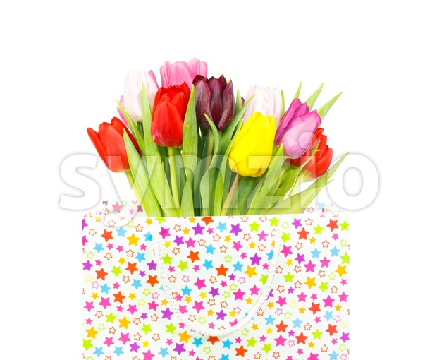 Bouquet of tulips in a gift bag Stock Photo