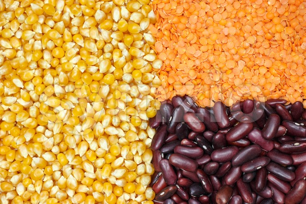 Grouped corn, lentils and beans Stock Photo