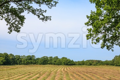 Glimpse on a mown hayfield Stock Photo