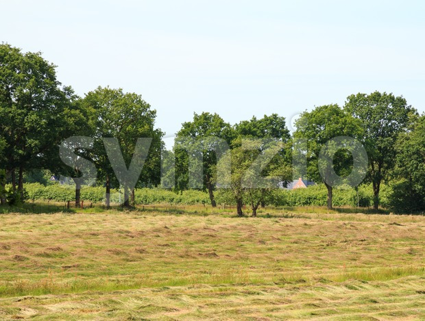 Rural area in The Netherlands Stock Photo