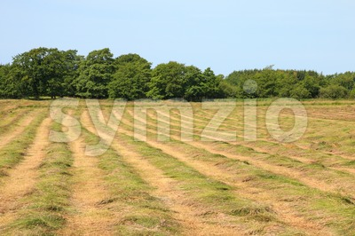 Mown hayfield on a summer day Stock Photo