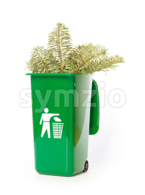 Branches of a pine tree in the green wheelie bin