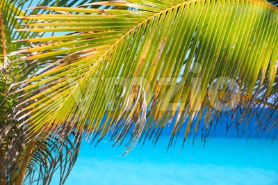 Palm leaves on tropical beach with blue sea Stock Photo