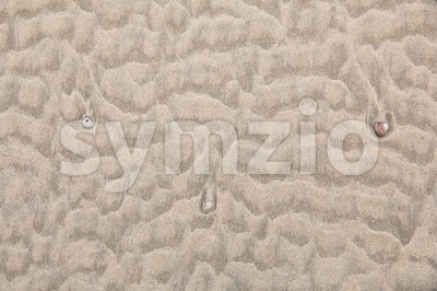 Top view of the sandy beach with shells Stock Photo