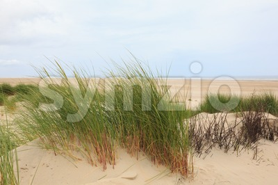 View on the sandy beach Stock Photo